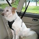 Dog Car Harnesses | Dog Car & Travel Dog Harnesses